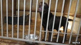 A dog seized by the RSPCA