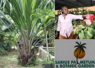 Left: A rare elaeis palm in Ajoke Muhammed's garden in Abuja. Right top: Ajoke Muhammed in her nursery; Right bottom: Sign for Ajoke Muhammed's garden