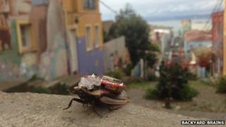 A cockroach wearing the 'electronic backpack'
