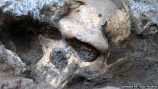 The Dmanisi D4500 early Homo cranium