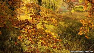 Autumn Colour at Polesden Lacey, Surrey, by Christopher Page