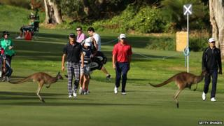 Kangaroos jump in front of Fredrik Andersson Hed of Sweden and Daniel Popovic of Australia at the Perth International golf tournament