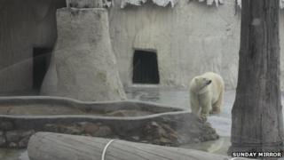 Yupi the polar bear