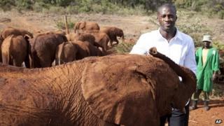 Yaya Toure visits baby elephants at the David Sheldrick Wildlife Trust elephant orphanage in Kenya (29 October 2013)