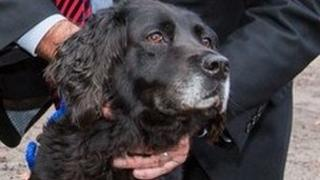 Meg, police dog with the Nottinghamshire force