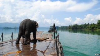 An elephant prepares to board a ferry