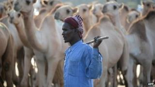 A camel herder in Mogadishu, Somalia