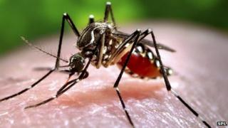 A mosquito feeding