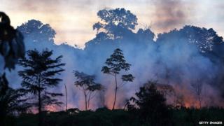 Forests in Peru