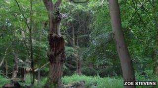 dodderhill common trees