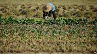 File photo: Farmer in China, 19 November 2013