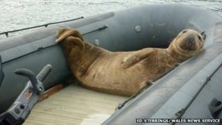 seal in boat