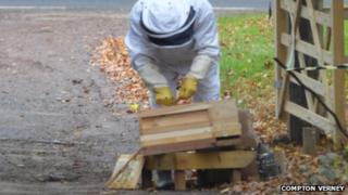 Beekeeper looking at damaged hive