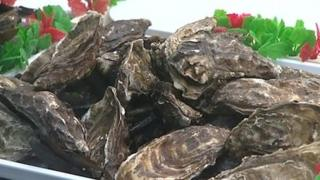 Oysters in a fishmongers