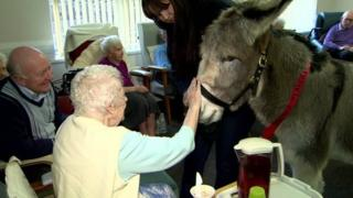 Donkey being stroked by woman