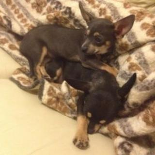 Two stolen puppies, Max and Lilly