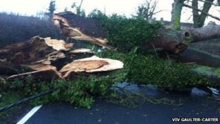 Fallen tree on Towersey Road
