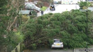 Fallen tree in Sholing
