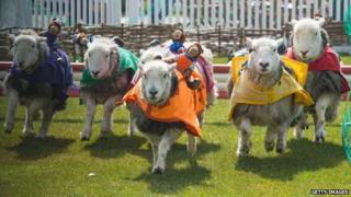 Lamb National at Ascot