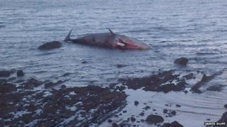 The city council is responsible for removing the sperm whale's carcass