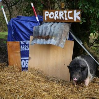 Porrick the pig in Shorncliffe, Kent