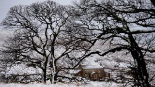 Snowy scene near Allendale in Northumberland