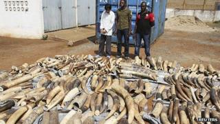 Haul of elephant tusks with three arrested suspects in Lome. 28 Jan 2014