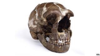 Tabun Neanderthal