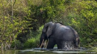 A bull elephant bathes and drinks water on the northern shores of Lake Edward inside Virunga National Park, DR Congo - August 2013