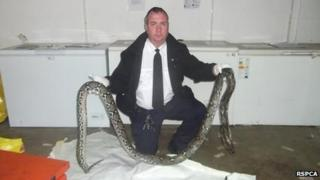The dead python with RSPCA animal collection officer Brian Milligan