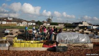 Vetch Field veg project