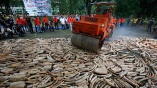 Ivory destruction