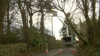 Falling trees took out many power lines around the country