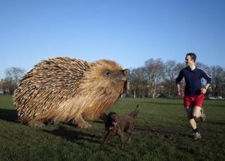 A man runs past a model of a hedgehog, measuring 12 feet long, 8 feet wide, and 7 feet tall, on Clapham Common in south London