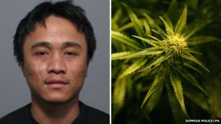 Hung Tran and a cannabis plant
