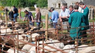 Priddy sheep fair