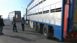 Live export lorries