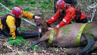 Horse rescued from the River Irwell