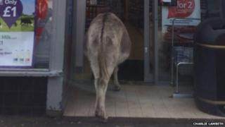 Donkey entering Tesco in Brockenhurst