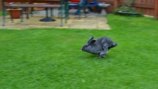 Rabbit running in garden