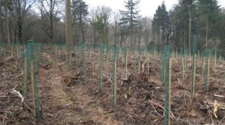 The restocked area at Wentwood Forest
