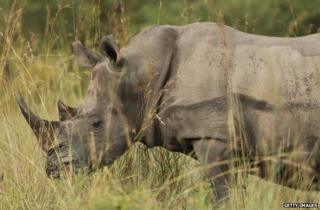 A rhino in Kruger National Park in Skukuza, South Africa, February 2013