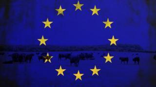 eu flag and cows