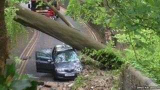 Fallen tree at Brynmill Lane, Swansea