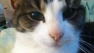 Cat Biffy