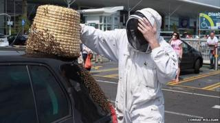 Bee swarm on car in Bournemouth