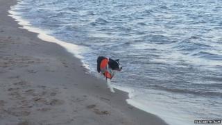 Collie on the beach