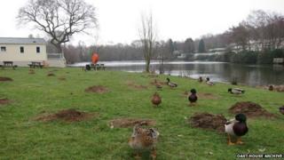 Lake at Coghurst Hall Holiday Park