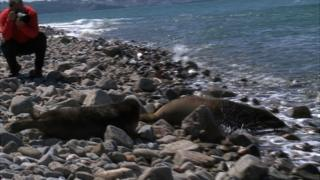 Seal pups released off Jethou