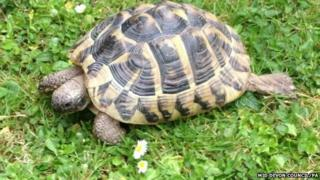 Tortoise found in recycling